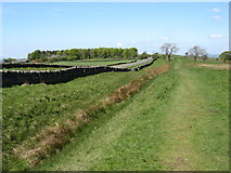 NY9569 : The Hadrian's Wall Path beside the Ditch by David Purchase