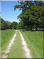 SE8675 : The old driveway, Scampston Hall by Pauline E