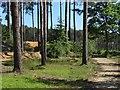 SU8565 : Bracknell Forest by Alan Hunt