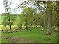 NT9601 : Edge of Dueshill Wood by Richard Webb