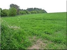 SK6054 : Grassy field south of Haywood Oaks by Christine Johnstone