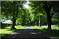ST8695 : Avenue of lime trees by Philip Halling