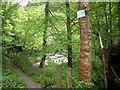 NS9898 : A path by the River Devon near Vicar's Bridge by Stanley Howe