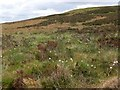 NT2729 : Cotton grass on Peat Hill by Jim Barton