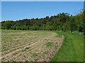 TM4586 : Field boundary near Willingham Wood Belt by Roger Jones