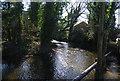 TQ5669 : River Darent by N Chadwick