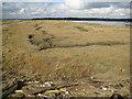 TQ9495 : Wallasea Island: Saltings by Nigel Cox
