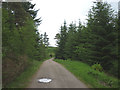SD3395 : Forest track and bridleway, Jack Gap Plantation by Karl and Ali