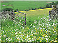 NY9447 : Wildflower meadows by Trevor Littlewood