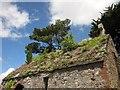 SX9065 : Roof of St Michael's Chapel, Torquay by Derek Harper