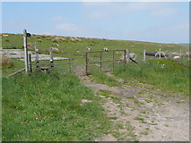 SE0328 : The Calderdale Way at Castle Carr Road by Humphrey Bolton