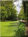 TQ0361 : Basingstoke Canal by Derek Harper