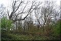 TQ6868 : Lodge Wood, Cobham Park by N Chadwick