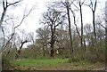 TQ6868 : Woodland, Cobham Park by N Chadwick