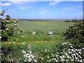 NU0840 : Beehives in oilseed rape field near Fenham by Graham Robson