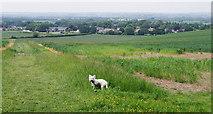 TL3852 : Harlton from the Barrington Ridge by M H Evans