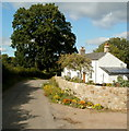 SO3105 : Tree and cottages, Saron Road, Goytre by Jaggery