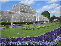 TQ1876 : Palm House by william