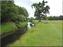 TQ2172 : Richmond Park:  Beverley Brook by Dr Neil Clifton
