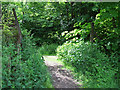 NS3965 : National Cycle Network Route 75 by Thomas Nugent