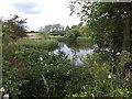 SZ8697 : The mill pond at Sidlesham Quay by David Smith