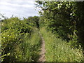 SZ8596 : Footpath near RSPB centre, Pagham Harbour reserve by David Smith