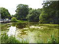 TQ2373 : Putney Heath:  Seven Posts Pond by Dr Neil Clifton