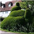 TQ8327 : Topiary, Newenden by nick macneill