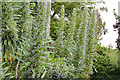 "J3372 : ""Exotic"" tree, Botanic Gardens, Belfast (1) by Albert Bridge"