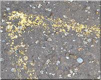 J3371 : Survey mark, Stranmillis, Belfast by Albert Bridge