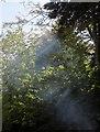 SX9064 : Smoke in the sun, Cleveland Road, Torquay by Derek Harper