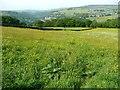 SD9926 : Erringden Footpath 3 crossing a buttercup meadow by Humphrey Bolton