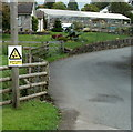 SO3205 : Caution - slow walking ducks, Nantyderry by Jaggery
