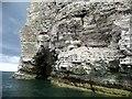 TA2471 : Sea birds nesting on the cliff face, Breil Nook [2] by Christine Johnstone