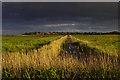 TM4658 : Marshland north of Aldeburgh by Ian Taylor