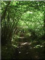TQ1007 : Richardson's Wood by Simon Carey