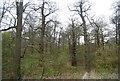 TQ6969 : Cobham Wood by N Chadwick