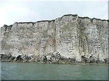TA1974 : Bartlett Nab, Bempton Cliffs by Christine Johnstone