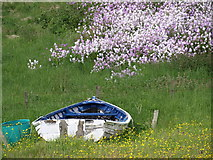 NC8766 : Boat and flowers, Portskerra by CMackay