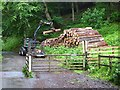 SD3895 : Stacking timber in Station Scar Wood by Oliver Dixon