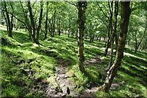 SD9726 : The Pennine Way through Callis Wood by Bill Boaden