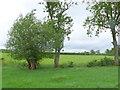 SP2946 : Brookside Willow near Fulready by Nigel Mykura