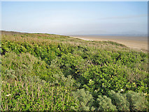 SN3801 : Vegetation on the dunes by Richard Dorrell