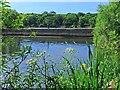 SR9794 : Grassy Bridge, Bosherston Lily Ponds by Robin Drayton