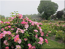 TQ3005 : Preston Park Rose Gardens and the Rotunda by Peter Whitcomb