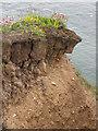 TA2570 : Crumbling clifftop by Pauline E