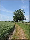 SU1068 : Footpath and fields near West Kennett by Gareth James