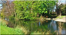 O1329 : Lake at Terenure College, linked to Poddle and Dodder rivers by jwd