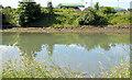 J3675 : The Connswater, Victoria Park, Belfast (2013-3) by Albert Bridge