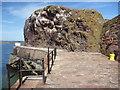 NT6779 : Coastal East Lothian : Kittiwake Crag, Victoria Harbour Entrance, Dunbar by Richard West